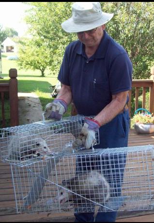 Varmints are not welcome in John's Garden